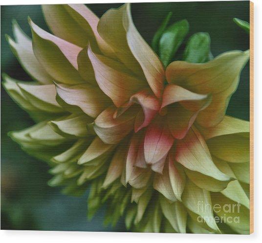 Special Dahlia Wood Print