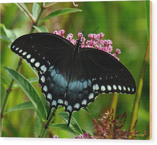 Spicebush Swallowtail Din038 Wood Print