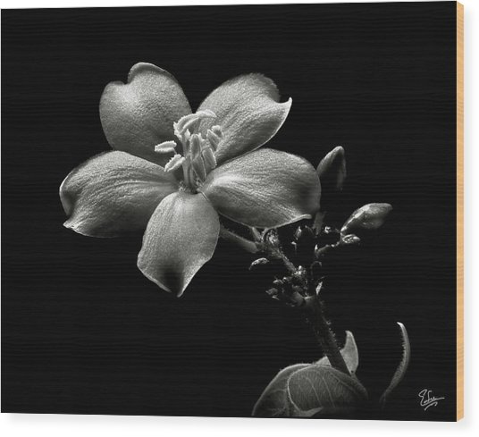 Spicy Jatropha In Black And White Wood Print