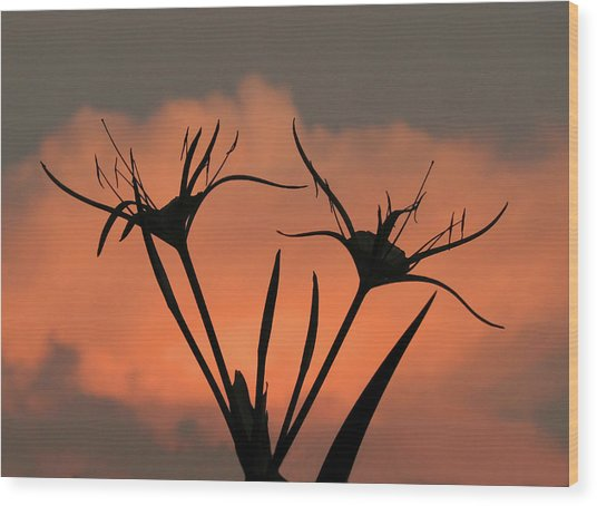 Spider Lilies At Sunset Wood Print