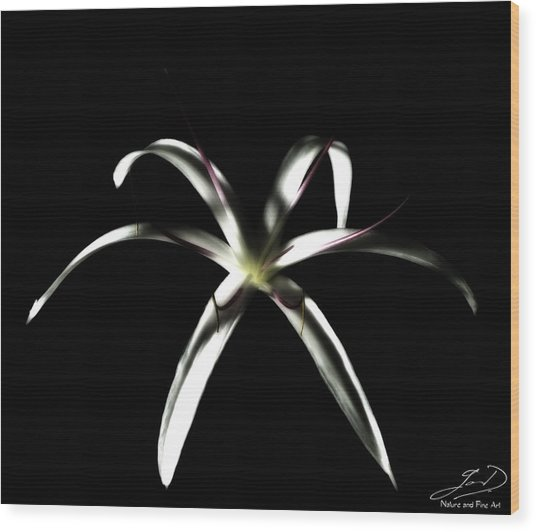 Spider Lily Wood Print by Ian Dean