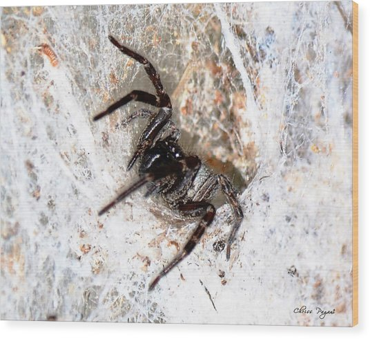Spiders Trap Wood Print