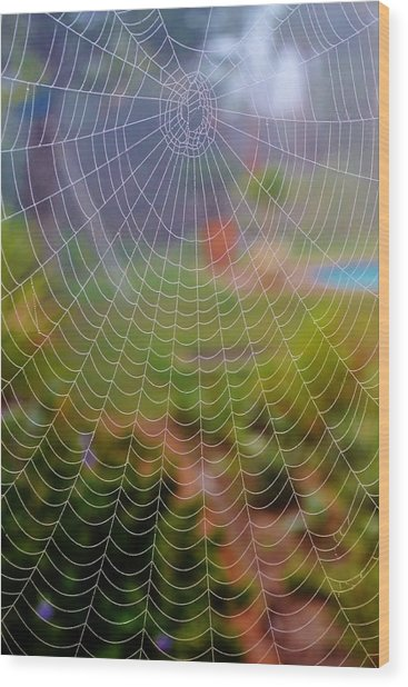Spiderweb With Dew Drops Wood Print