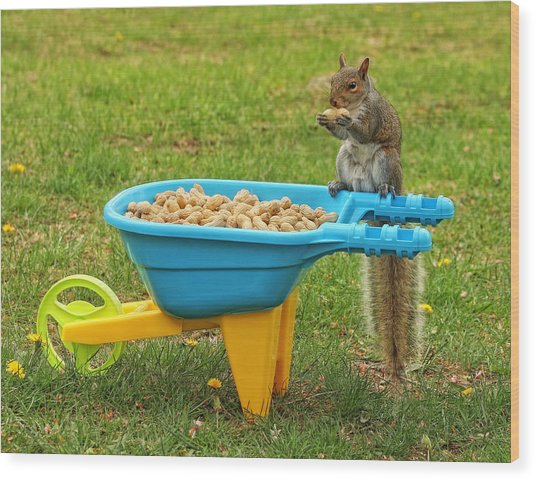 Spoiled Squirrel Wood Print