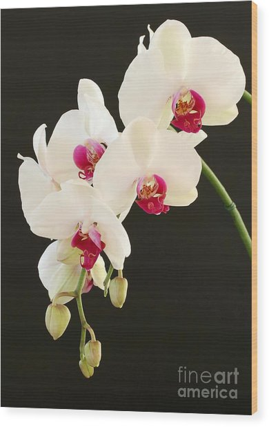 Spray Of White Orchids Wood Print