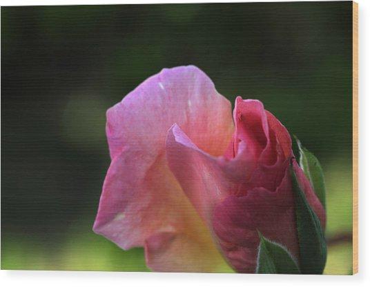 Spreading Petals Wood Print