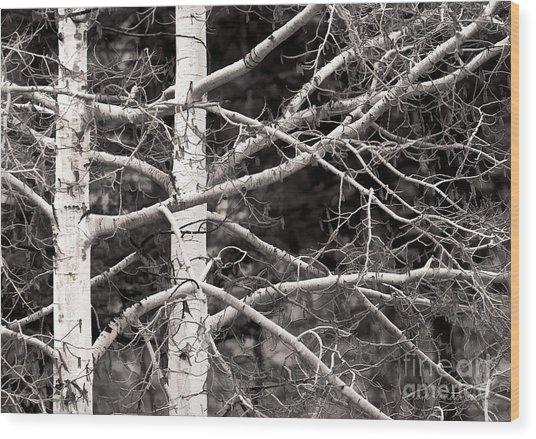 Spring Aspens Wood Print by Clare VanderVeen