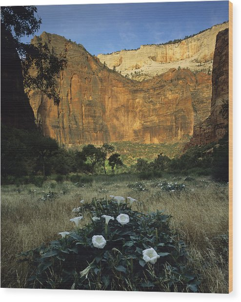 Spring At Big Bend Wood Print