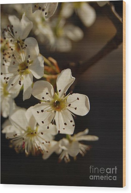 Spring Blossoms I Wood Print