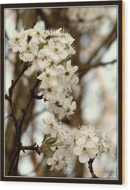 Spring Blossoms Wood Print by Megan Wilson