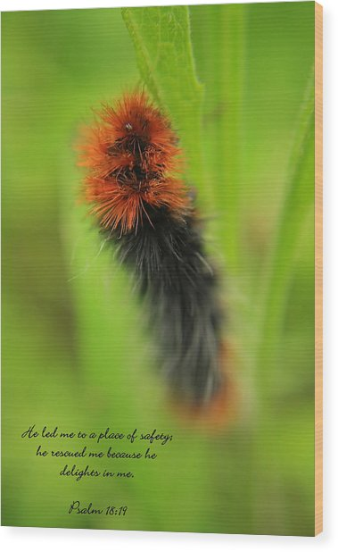 Spring Caterpillar Wood Print