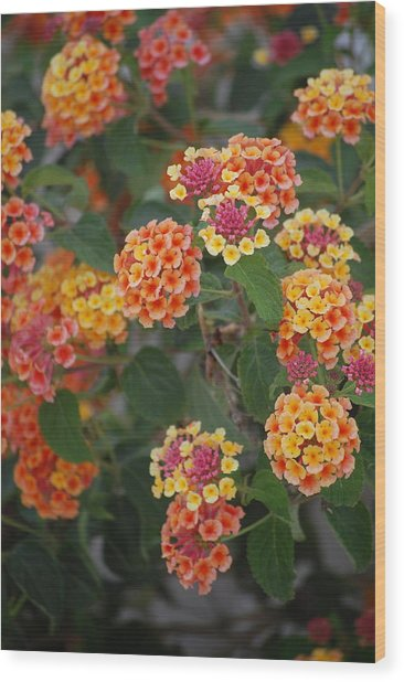 Spring Flowers Wood Print by Dickon Thompson