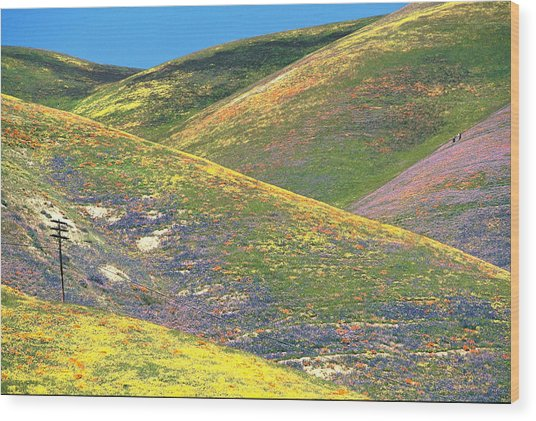 Spring In The Gorman Hills Wood Print