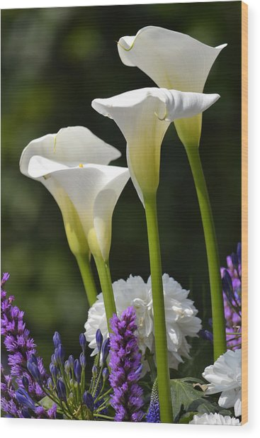 Spring Lillies Wood Print by Dickon Thompson