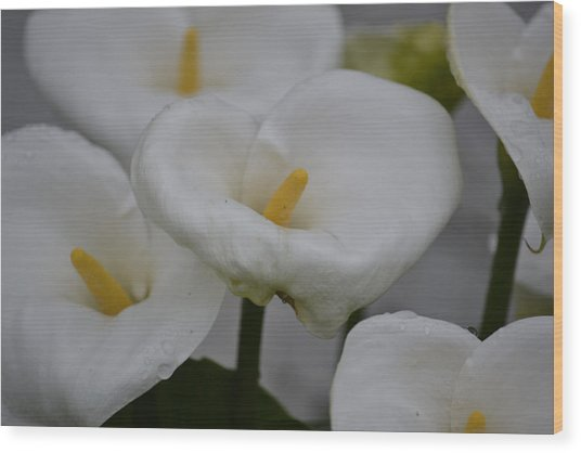 Spring Lillies II Wood Print by Dickon Thompson