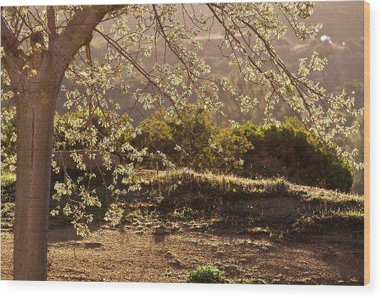 Spring Morning Light Wood Print