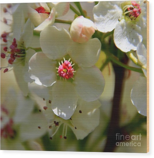 Spring Opening Wood Print