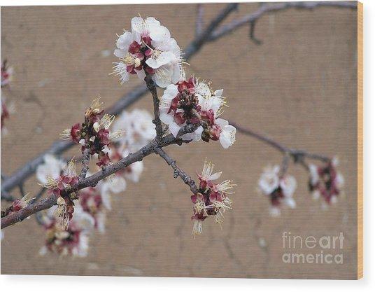Spring Promises Wood Print