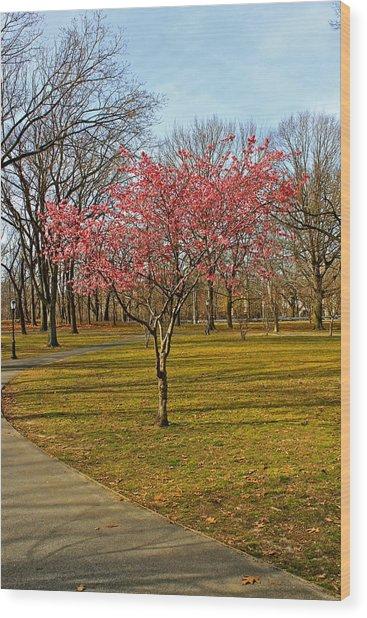 Spring Tree Blooms  Wood Print