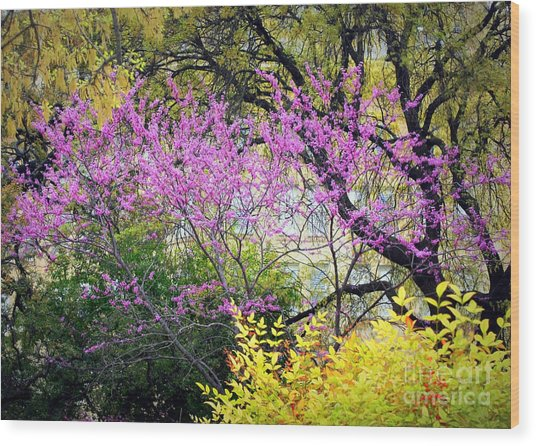 Spring Trees In San Antonio Wood Print