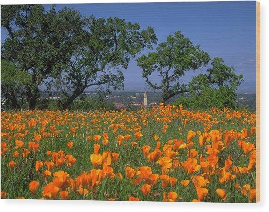 Springtime At Stanford Wood Print