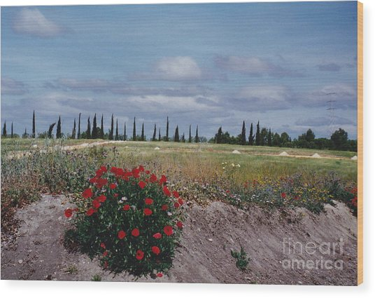 Springtime In Spain Wood Print by Barbara Plattenburg