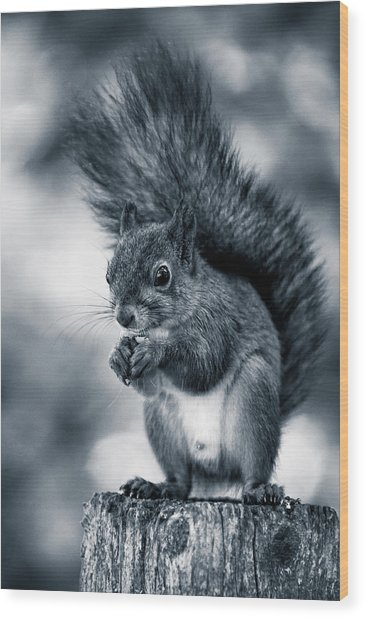 Squirrel In Monochrome Wood Print