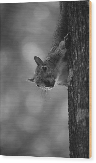 Squirrel On A Tree Wood Print by Carrie Munoz