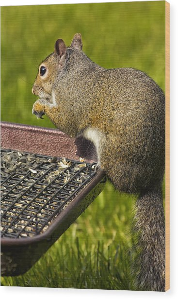 Squirrel On Seed Tray Wood Print by Bill Tiepelman