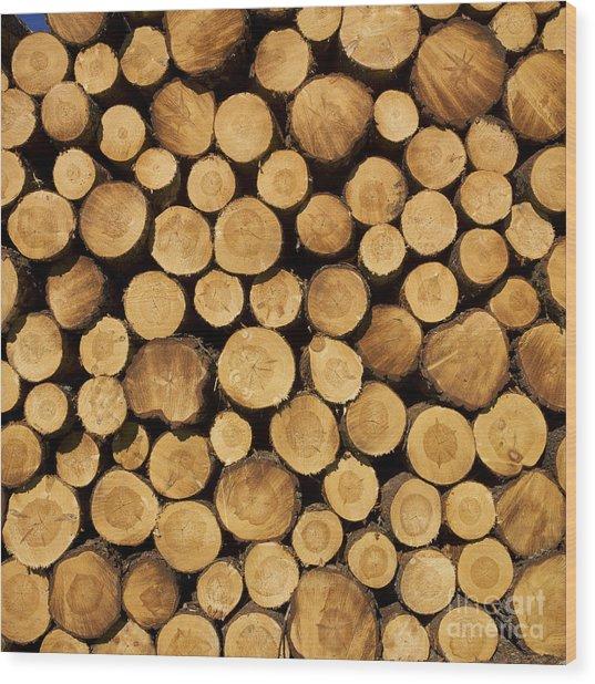 Stack Of Wood Logs. Wood Print