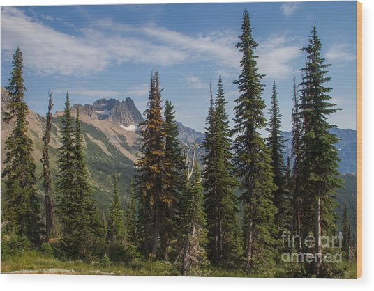 Wood Print featuring the photograph Standing Tall And Proud Are Mount Gould And Subalpine Fir 2 by Katie LaSalle-Lowery