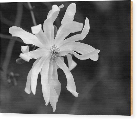 Star Magnolia Wood Print