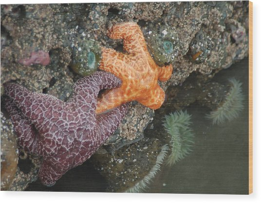 Starfish Pair I Wood Print