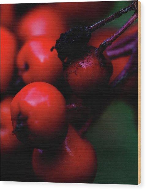Steamboat Springs Berries Wood Print