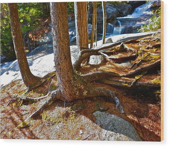 Step Falls Roots Wood Print by George Ramos