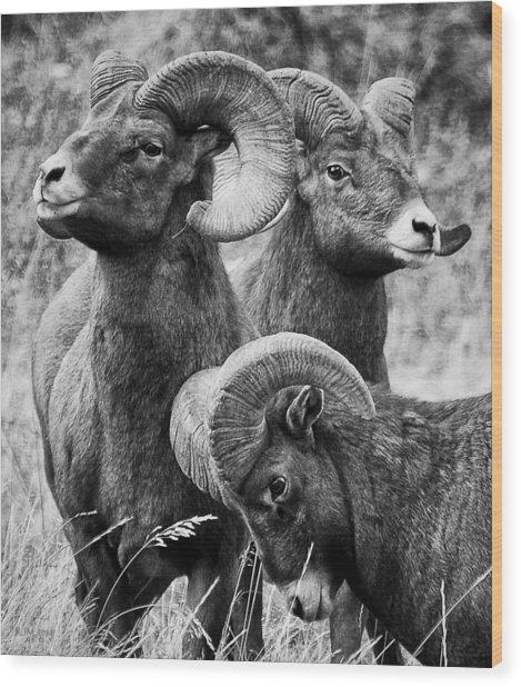 Stoic Horns Wood Print