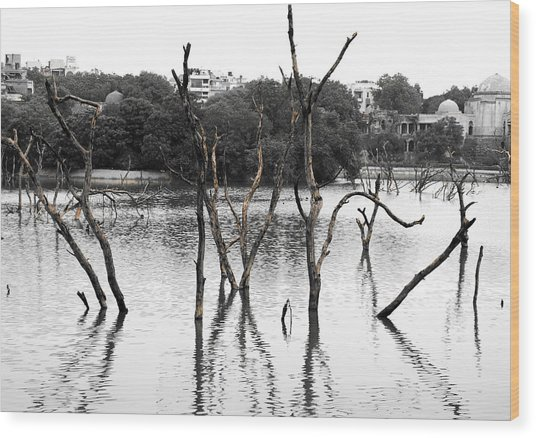 Stomps Of Trees In A Lake Wood Print