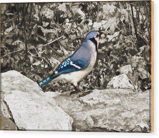 Stone Blue Jay Wood Print by Debra     Vatalaro