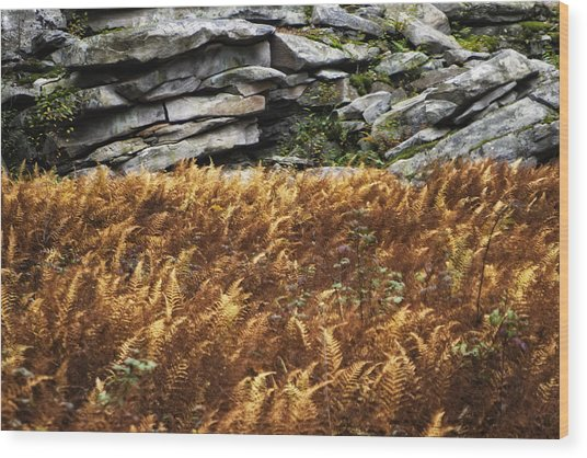 Stone Wall And Fern Wood Print