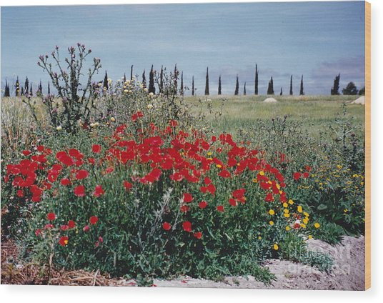 Striking Spanish Scenery Wood Print by Barbara Plattenburg