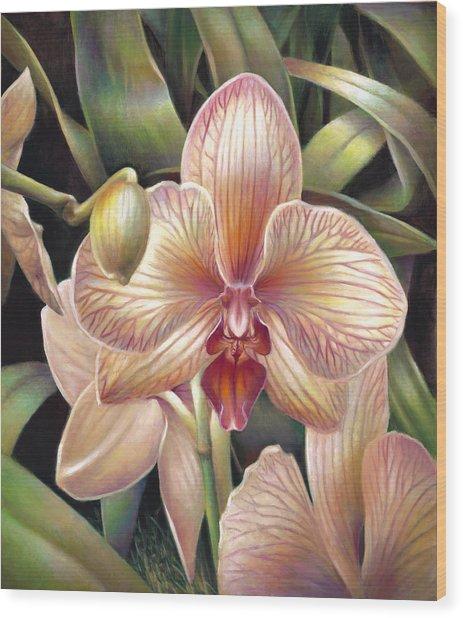 Striped Peach Orchid Wood Print