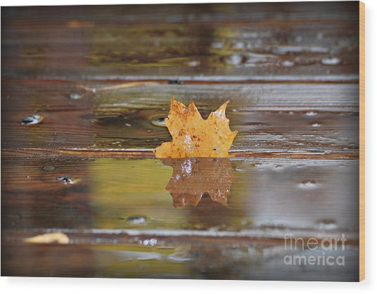 Stuck Maple Leaf Wood Print