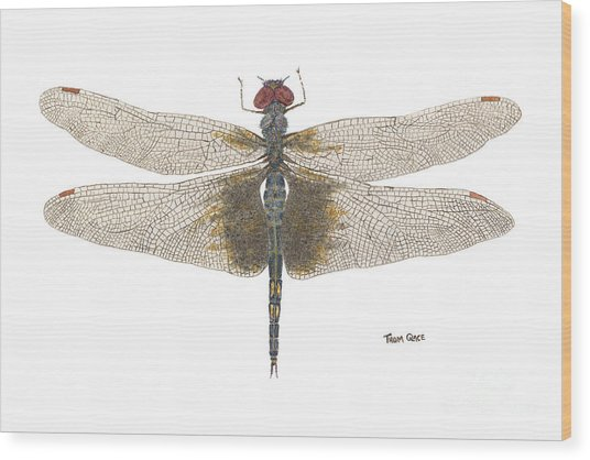 Study Of A Female Black Saddlebags Wood Print