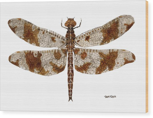 Study Of A Female Filigree Skimmer Wood Print