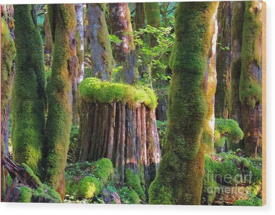 Stump And Moss  Wood Print