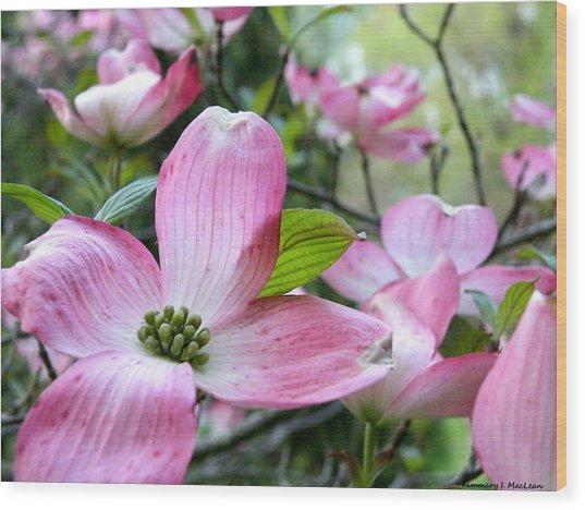 Subtle Magnolia Wood Print