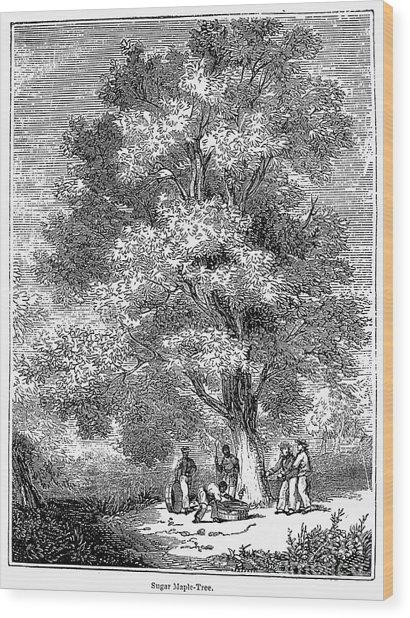 Sugar-maple Tree Wood Print