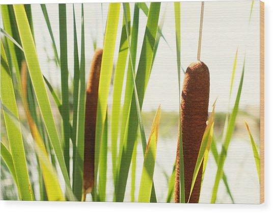 Summer Cattails Wood Print by JL Creative  Captures