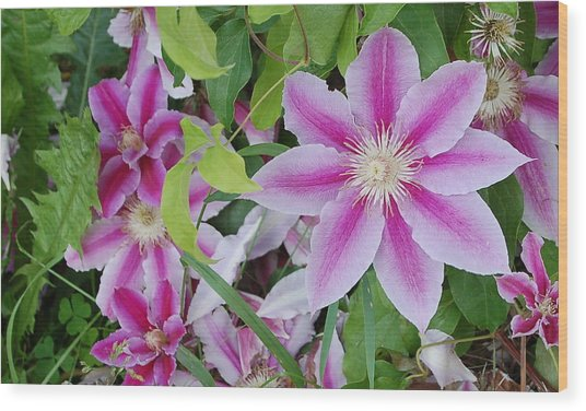 Summer Clematis Wood Print
