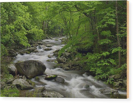 Summer Stream In Great Smoky Mountains  Wood Print by Darrell Young